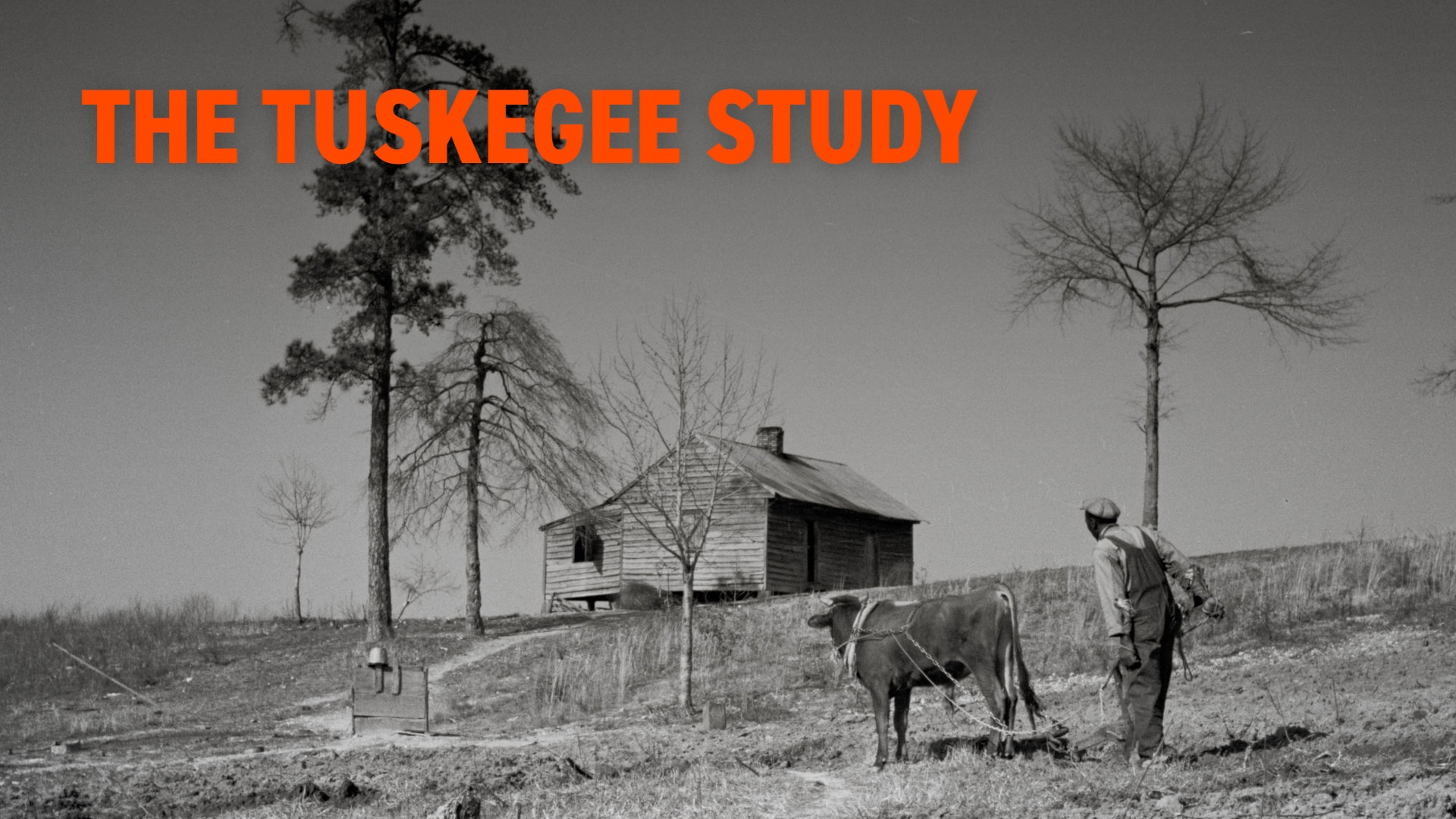 The Tuskegee Study | Black History in Two Minutes (or so)