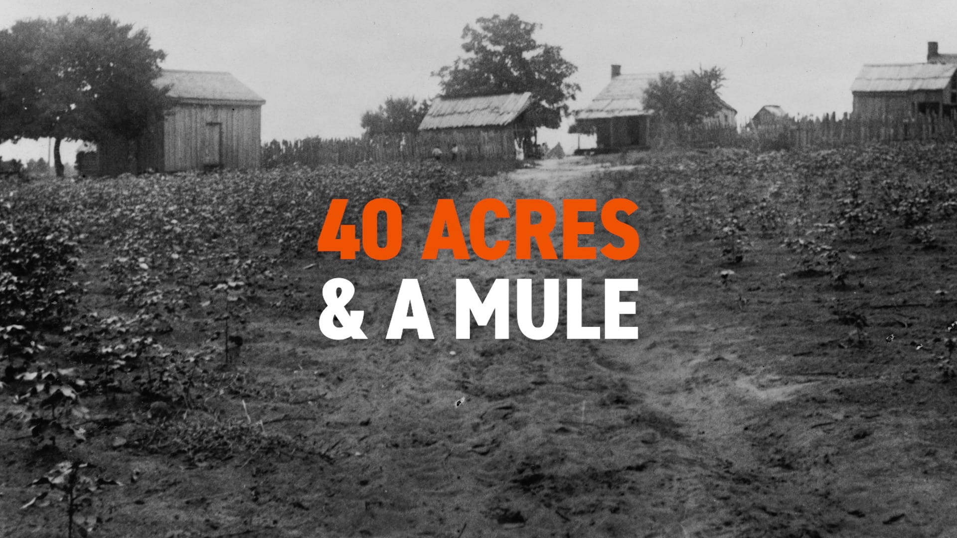 Land: Giving Rise to the Famous Phrase 40 Acres & a Mule